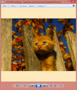 SY3H2PZcvnM.jpg - Средство просмотра фотографий Windows